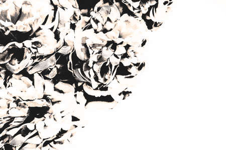 Beautiful abstract color black flowers on dark background, white flower frame and dark leaves texture, black background, colorful graphics banner