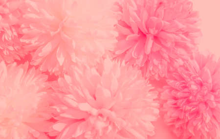 Beautiful abstract color pink flowers on white background, white flower frame, pink leaves texture, pink background 写真素材
