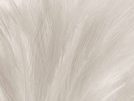 Beautiful abstract gray feathers on white background and soft white feather texture on white pattern and brown background, white texture, love theme