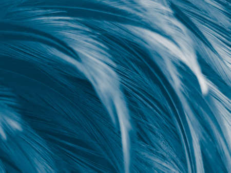 Beautiful abstract colorful white and blue feathers on white background and soft white feather texture on blue pattern and blue background, feather background, blue banners 스톡 콘텐츠