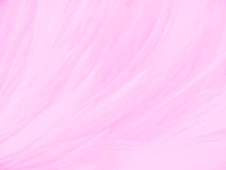 Beautiful abstract gray and pink feathers on white background,  white feather frame texture on pink pattern and pink background, love theme and valentines day