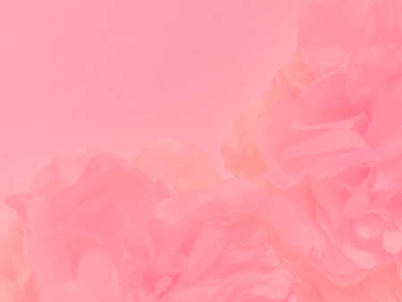 Beautiful abstract color white and pink flowers on white background and white flower frame and pink leaves texture, pink background, colorful graphics banner happy valentine day