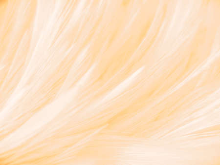 Beautiful abstract colorful yellow brown and white feathers on white background and soft white orange feather texture on white pattern and brown texture, orange background