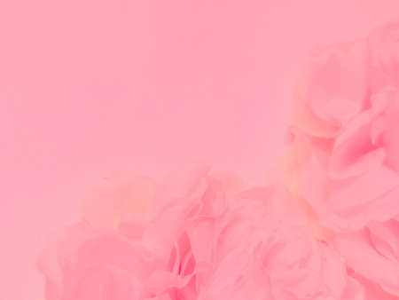 Beautiful abstract color white and pink flowers on white background and white graphic flower frame and pink leaves texture, pink background, colorful graphics banner happy valentine day