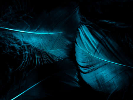 Beautiful abstract blue feathers on dark background and black feather texture on blue pattern and blue background, feather wallpaper, blue banners, love theme, valentines day, dark texture