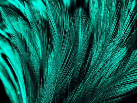 Beautiful abstract yellow and green feathers on dark background, black feather texture on dark pattern and green background, feather wallpaper, love theme, valentines day