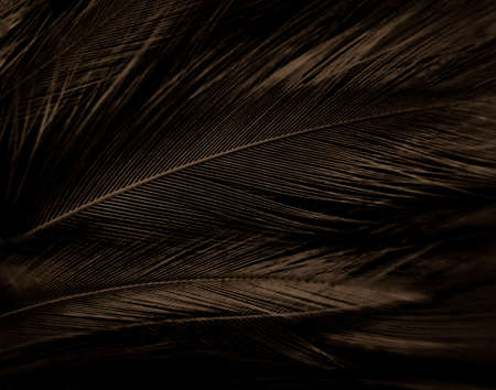 Beautiful abstract white and brown feathers on black background and soft yellow feather texture on white pattern and yellow background, feather background, gold feathers banners