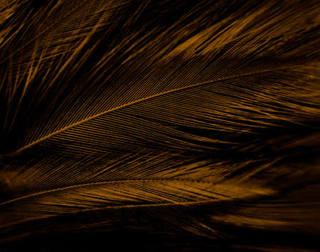 Beautiful abstract white and brown feathers on white background, soft yellow feather texture on white pattern, yellow background, feather background, gold feathers, valentines day, sweet heart wedding Zdjęcie Seryjne - 162208264