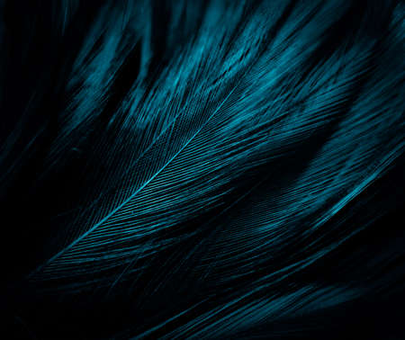 Beautiful abstract blue feathers on dark background, black feather texture on blue pattern and blue background, feather wallpaper, blue banners, love theme, valentines day, dark texture