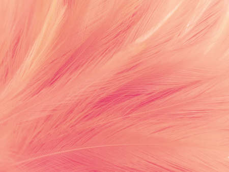 Beautiful abstract light pink feathers on white 스톡 콘텐츠