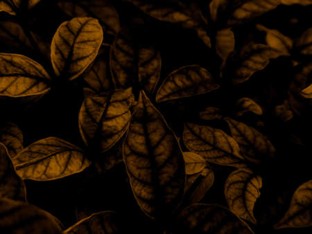 Beautiful abstract color black and yellow flowers on black background and gold flower frame and brown leaves texture, dark background, orange and gold love banner, brown and yellow background 스톡 콘텐츠