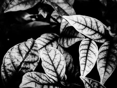 Beautiful abstract color gray and black flowers on dark background, dark leaves texture, dark background, colorful graphics banner, white leaves, black leaves texture