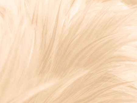 Beautiful abstract orange and white feathers on white background, soft brown feather texture on white pattern background, yellow feather background, light brown texture 스톡 콘텐츠