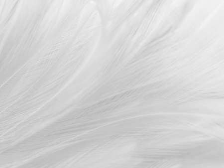 Beautiful abstract black feathers on white background and soft white feather texture on white texture pattern, dark theme wallpaper, gray feather background, gray banners