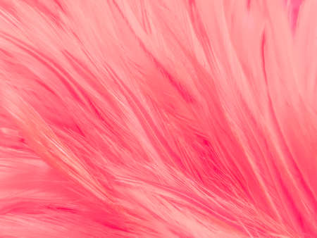 Beautiful abstract light pink feathers on white background,  white feather frame texture on pink texture pattern and pink background, love theme wallpaper and valentines day