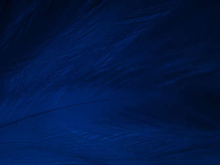 Beautiful abstract blue feathers on black background, black feather texture on blue pattern and blue background, feather wallpaper, blue banners, love theme, valentines day, soft texture 스톡 콘텐츠
