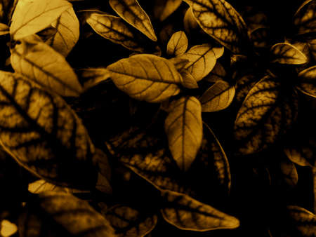 Beautiful abstract color black and yellow flowers on black background and gold flower frame and brown leaves texture, dark background, orange and gold love banner, brown and yellow background Reklamní fotografie