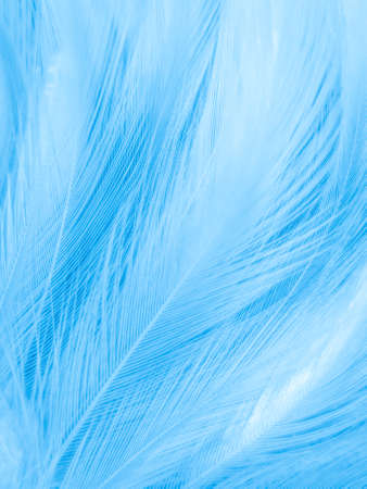 Beautiful abstract blue feathers on white background, white feather texture and blue background, feather wallpaper, blue texture banners, love theme, valentines day. Reklamní fotografie