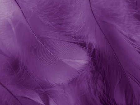 Beautiful abstract purple feathers on white background, black feather texture on dark pattern and purple background, colorful feather wallpaper, love theme, valentines day, light purple gradient