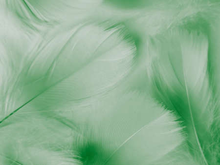 Beautiful abstract green feathers on white background, yellow feather texture on dark pattern,  green background, feather wallpaper, love theme, valentines day, green gradient texture Reklamní fotografie