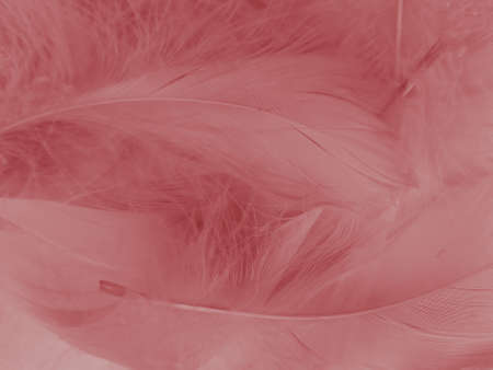 Beautiful abstract red feathers on white background, white feather texture on red pattern and red background, pink feather wallpaper, love theme, wedding valentines day, red gradient Reklamní fotografie