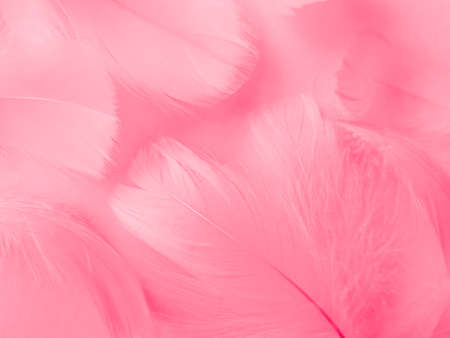 Beautiful abstract light pink feathers on white background,  white feather frame on pink texture pattern and pink background, love theme wallpaper and valentines day