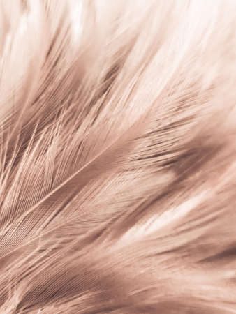 Beautiful abstract white and brown feathers on white background and soft yellow feather texture on white pattern and yellow background, feather background, gold feathers banners, brown texture