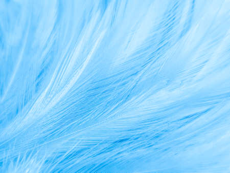 Beautiful abstract blue feathers on white background, white feather texture and blue background, feather wallpaper, blue texture banners, love theme, valentines day , gray gradient 免版税图像