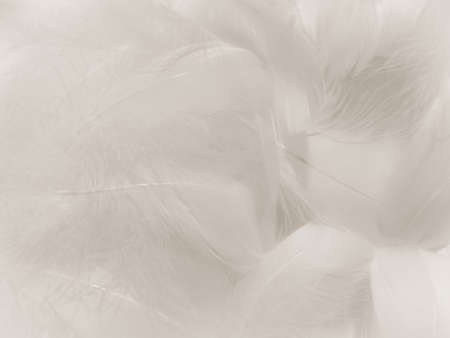 Beautiful abstract gray feathers on white background, soft white feather texture on white texture pattern, light pink theme wallpaper, black feather background, white gradient frame banners