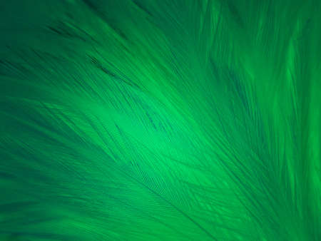 Beautiful abstract green feathers on white background, yellow feather texture on dark pattern,  green background, feather wallpaper, love theme, valentines day, green gradient texture 免版税图像