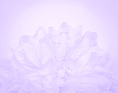 Beautiful abstract light purple flowers on white background, white flower frame,  purple leaves texture, gray background, valentines day, love theme, purple gradient texture 免版税图像