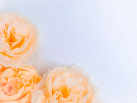 Beautiful abstract gray and yellow flowers on white background, gold flower frame and brown leaves texture, brown background, orange and gold love banner, brown and yellow background 免版税图像