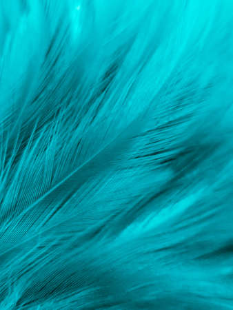 Beautiful abstract blue feathers on white background, white feather texture and blue background, feather wallpaper, blue texture banners, love theme, valentines day, light blue texture, white gradient