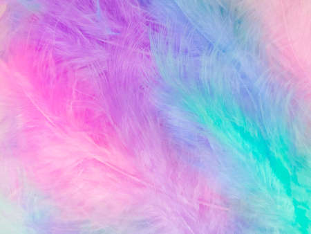 Beautiful abstract light pink feathers on colorful background, colorful feather frame on green purple and blue texture pattern, pink background, love theme wallpaper, valentines day, white gradient 免版税图像