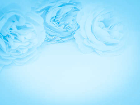 Beautiful abstract light blue flowers on white background, white flower frame,  blue leaves texture, gray background, valentines day, love theme, blue gradient texture