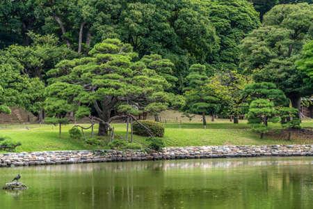 Old japanese pine tree reflections at Hamarikyu Gardens in Tokyo