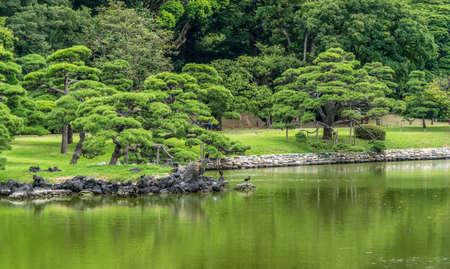 Panoramic view of old japanese pine tree reflections at Hamarikyu Gardens in Tokyo