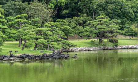 Panoramic view of Hamarikyu Gardens in Tokyo (浜離宮庭園). Old japanese pine tree reflections at Shioiri no ike Pond (潮入の池). The only remaining tidal lake in Tokyo. Refuge for wild migrating birds.