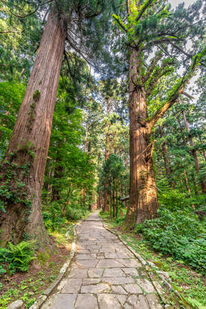 Stone path and Ancient Sugi trees (Cryptomeria japonica) or Japanese Cedar at Mount Haguro, One of the sacred mountains of Dewa Province (Dewa Sanzan). Located in Yamagata Prefecture, Japan.