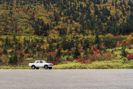 La camioneta en el bosque de fondo. Aparcamiento de coches blancos y asfalto.