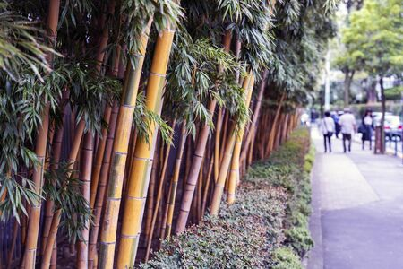 Row of Yellow Trunks of Bamboo on a Street.