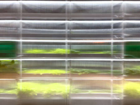 Polycarbonate greenhouse growing plants vegetables inside under artificial light.