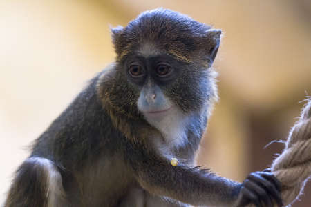 copycat: gray monkey sad looks away their relatives
