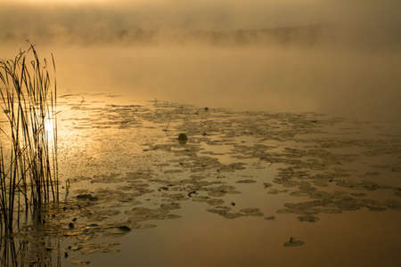 absolutely: Sunrise mist on the river painted in sepia. River landscape became absolutely fantastic.