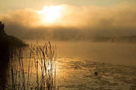 riverine: Sunrise mist on the river painted in sepia. River landscape became absolutely fantastic.