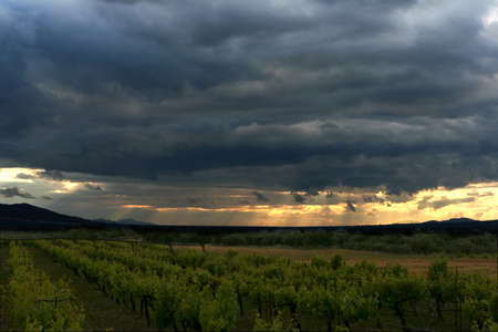 interspersed: Sunset over a mountain vineyard. The harsh sun rays and clouds on the horizon, interspersed landscape