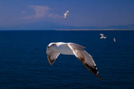 palate: Many different species of seagulls circling around the ship, waiting for them to throw a piece of pastry