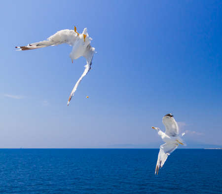 Many different species of seagulls circling around the ship, waiting for them to throw a piece of pastry
