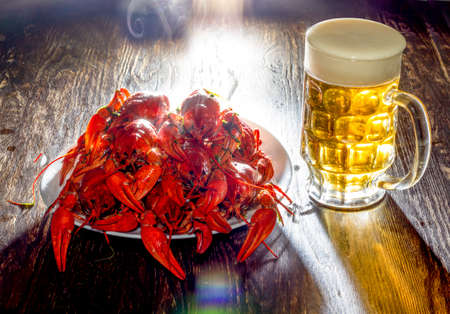 On a white plate there are many large red freshly welded crayfish. Nearby - a full glass of beer with foam. A plate and a glass stand on a wooden surface of dark color. Stock Photo