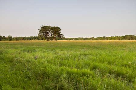 떨고있는 들판의 한가운데에 나무들이 모여 있습니다. 5 마리의 참나무가 들판에 서있다.